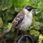 To Watch a Mockingbird