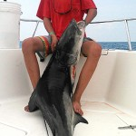 The Cobia are Here!