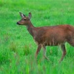Keeping the Deer at Bay