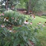 Create A Mini Meadow