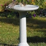 Attract More Birds With Fresh Water