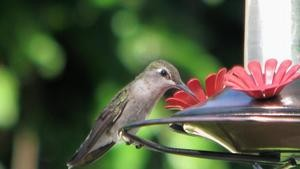 kind-food-put-hummingbird-feeder_86fb87acfa1bb5d9