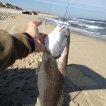 Outer Banks Drum