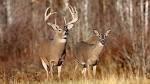 Deer Season Recap