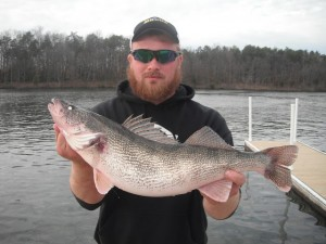 Saugeye caught at lake anna for Lake anna fishing report