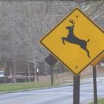 Oh (It's a) Deer!