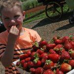 Strawberry Season is Near