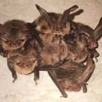Bats Out Of…..