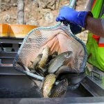 Fall Trout Stocking Underway