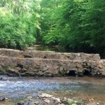 Dam Removed on Moore's Creek