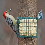 Suet Time