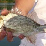 Freshwater Happenings