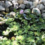 An Actual Water Garden