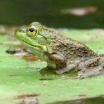 Frog Watching