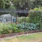 Cage Free Squirrels