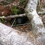 Be Aware and Beware of Bear Dens