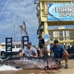 New Record Swordfish