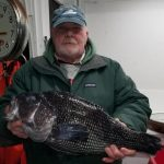 Sea Bass Season Now Open