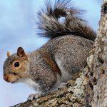 It's Squirrel Season – Really