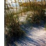 The Dance of the Sea Oats
